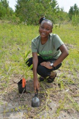 Jamaican high school student restoring a mangrove propagule to its natural environment