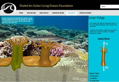 New Online Marine Science Curriculum by Living Oceans Foundation