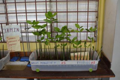 JAMIN Mangrove Restoration