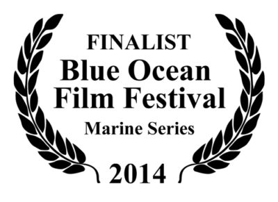 finalist blue ocean film festival marine series
