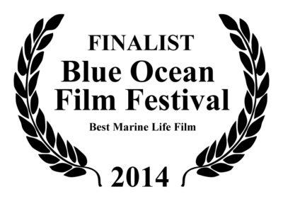 Finalist blue ocean film festival