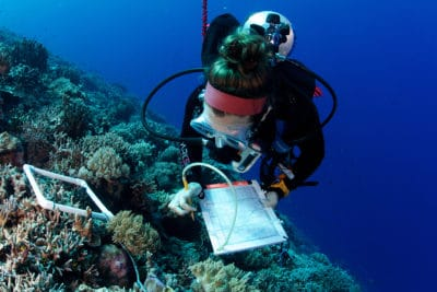 Marine Science and Coral Reef Research