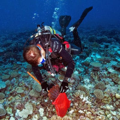 Crown-of-Thorns-Starfish-removal-from-coral-reef