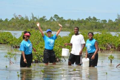 Caribbean Mangrove Scavenger Hunt