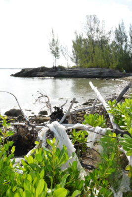 Coconut Tree Bay, a target for coastal cleanup here in Murphy Town.