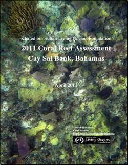 Cay Sal Bank Bahamas Field Report