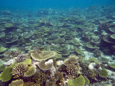 Anantara's Coral Reefs