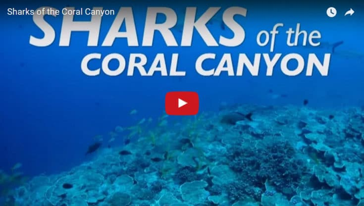 Sharks of the Coral Canyon Film Link