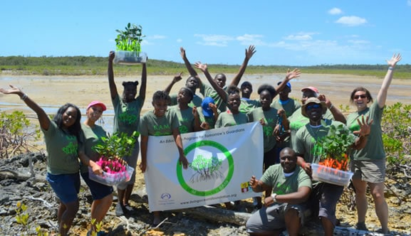 B.A.M. - A New Project to Restore Mangroves in The Bahamas