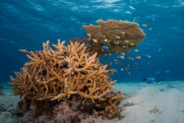 paragraph on underwater world