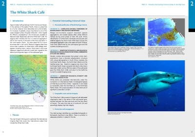 Protect the High Seas: White Shark Cafe