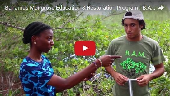 Managing and Monitoring Mangroves Video