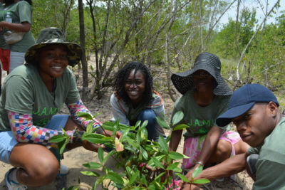 Students at William Knibb High School tag their mangrove propagules with flagging tape in preparation for planting the seedlings. (Photo from year 1 program)
