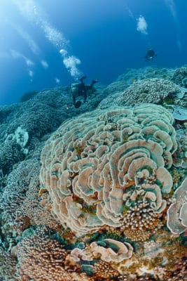 Scientists survey coral reef ©Michele Westmorland/iLCP