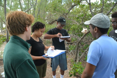 Students collect mangrove leaves and write their data in their mangrove journals.