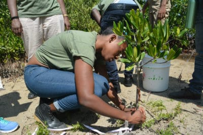 J.A.M.I.N. Year 2 students from William Knibb High School use scientific tools to monitor the mangroves as part of the mangrove education and restoration program.