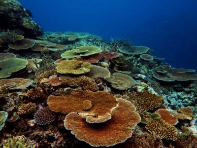 Healthy coral in Lau Province, Fiji.