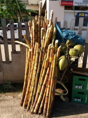 Sugar cane is still a farmed in Jamaica.