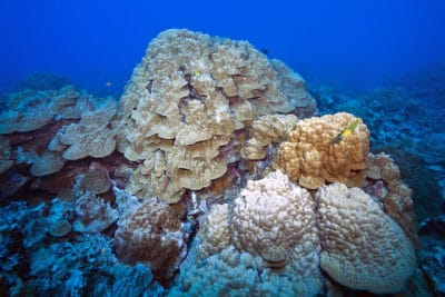 Reef in Rarotonga, Cook Islands