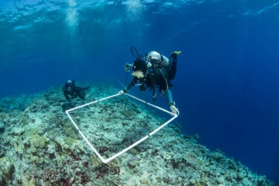 Kristin Stolberg (front) and Bar Ayalon (back), Scientists of the Khaled bin Sultan Living Oceans Foundation surveying corals at the outer reef edge of the Great Barrier Reef. Ribbon 7, green zone. Great visibility of more than 50 meters.