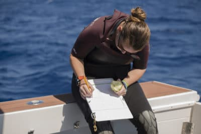 Alex Dempsey Coral Reef Ecologist and staff of the Khaled bin Sultan Living Oceans Foundation writing down here data in between dives during a surface interval break.