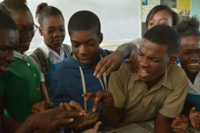 intern maggie dillon - Photo 2 - Students from William Knibb High School react to seeing a sea cucumber for the first time.