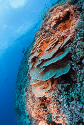 French Polynesia Reef (c)Michele Westmoreland/iLCP