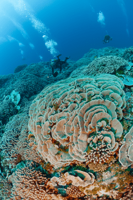 Diving in French Polynesia (c) Michele Westmorland/iLZP