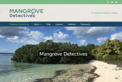 Mangrove Detectives