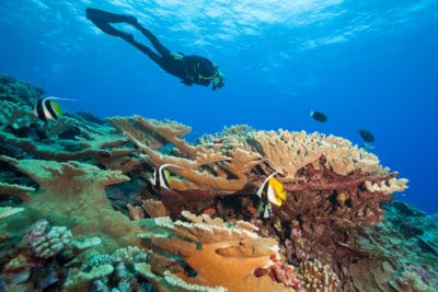 KSLOF scientists discover very high coral cover in French Polynesia