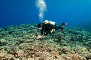 A scientist on the GRE conducts a benthic survey