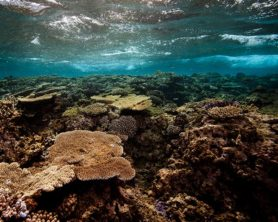 A moderate reef on the reef health grading scale