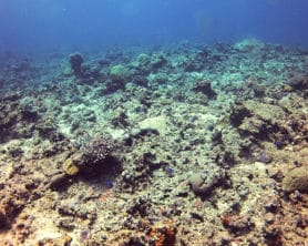 A poor reef on the reef health grading scale