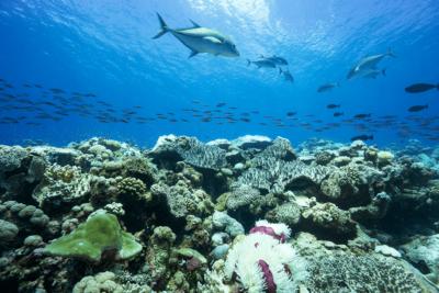 Bleaching reef in BIOT