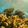 The Khaled bin Sultan Living Oceans Foundation Partners with NASA to Accelerate the Mapping of the World's Coral Reefs