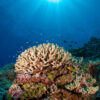 Announcing the Completion of the Global Reef Expedition